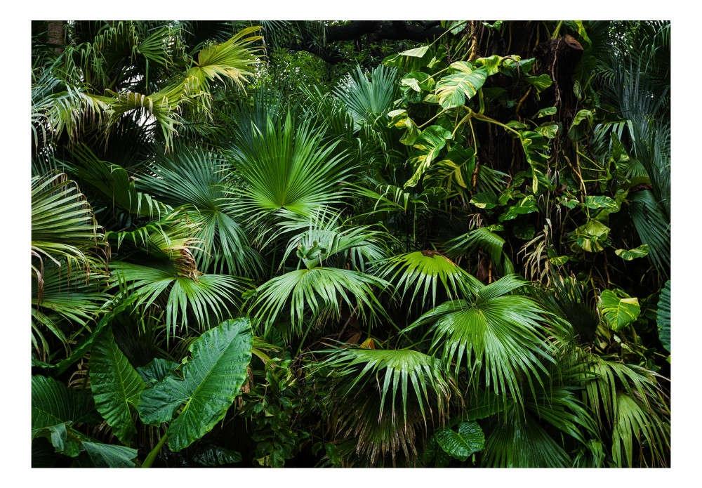 Papier peint Sunny Jungle 113745